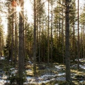 Lundsjön Landscapes_20150222_-3860