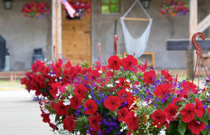 Camp-Dannevall-flowers